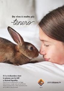 lav_coniglio